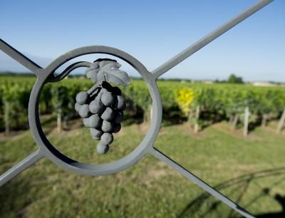 Image La vigne