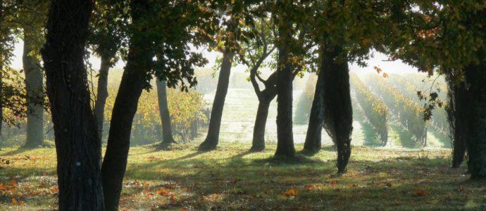 image Visite et Pique-nique dans le parc des Vignobles Chatonnet
